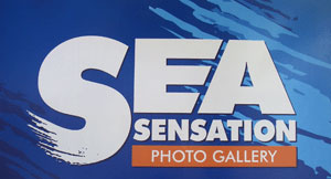 sea-sensation-logo